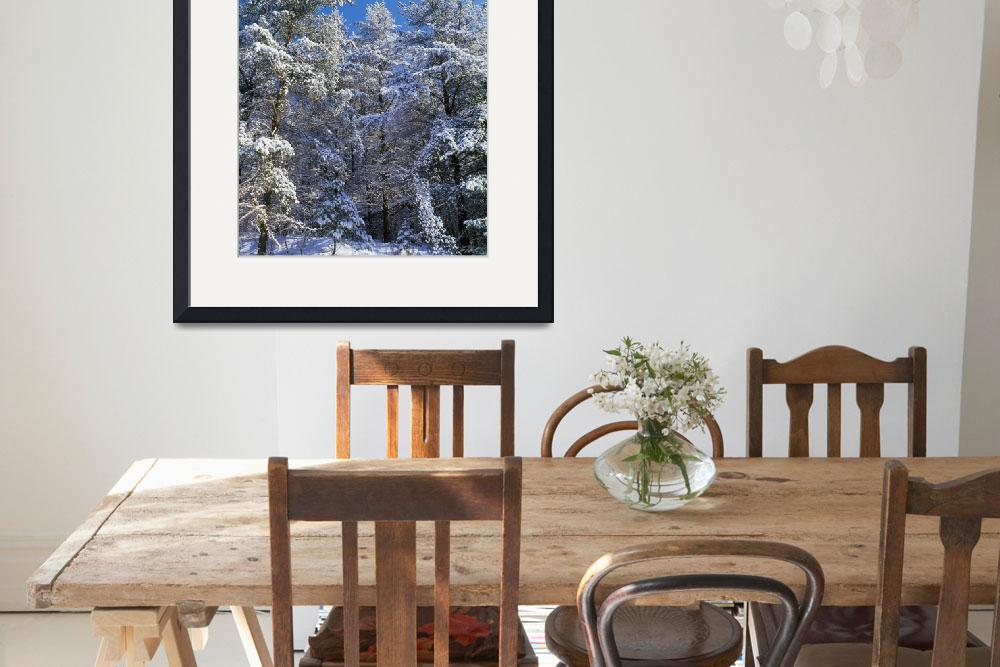 """""""Low angle view of snow-covered conifer trees&quot  by Panoramic_Images"""