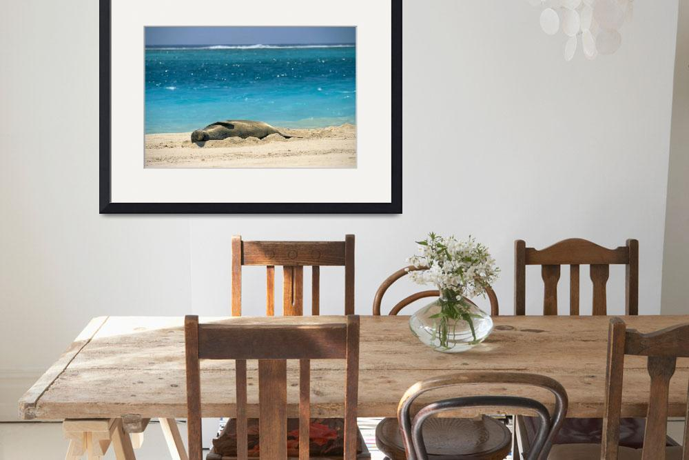 """""""Midway Atoll, Hawaiian Monk Seal Laying In Sand Wi""""  by DesignPics"""