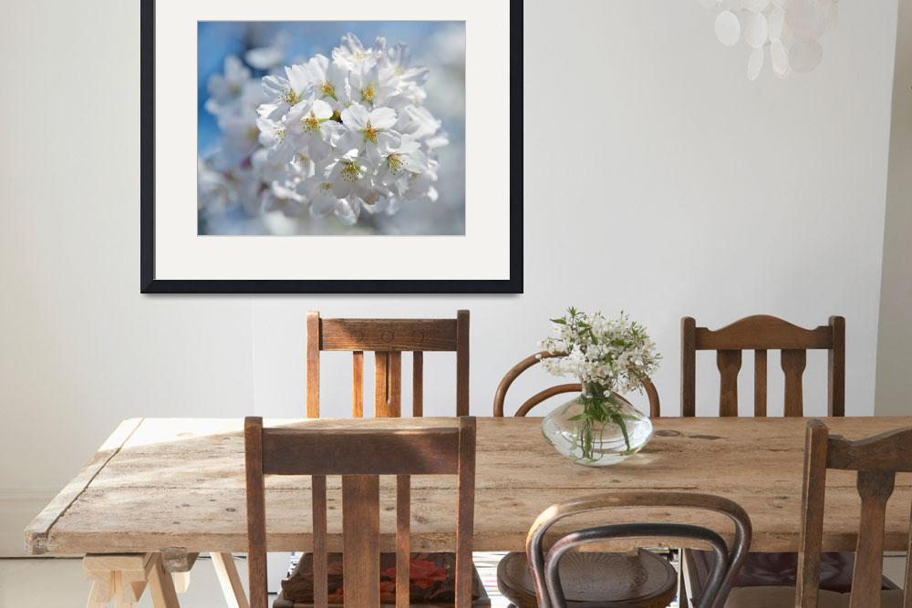 """""""In Full Bloom&quot  (2011) by ImageArt-Photography"""