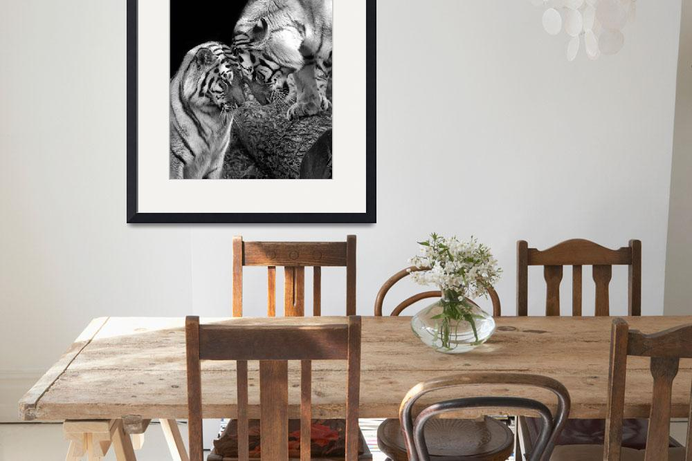 """""""Tiger Love Siberian Tigers Black and White Print&quot  (2011) by StephsShoes"""