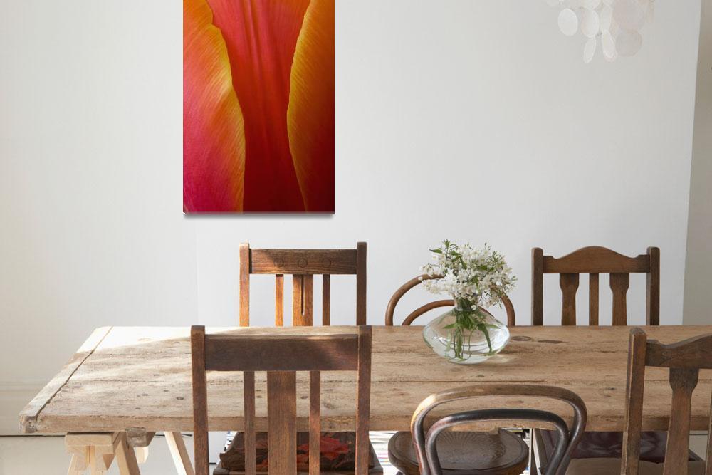 """Extreme Close-Up Of Colorful Tulip Petals&quot  by DesignPics"