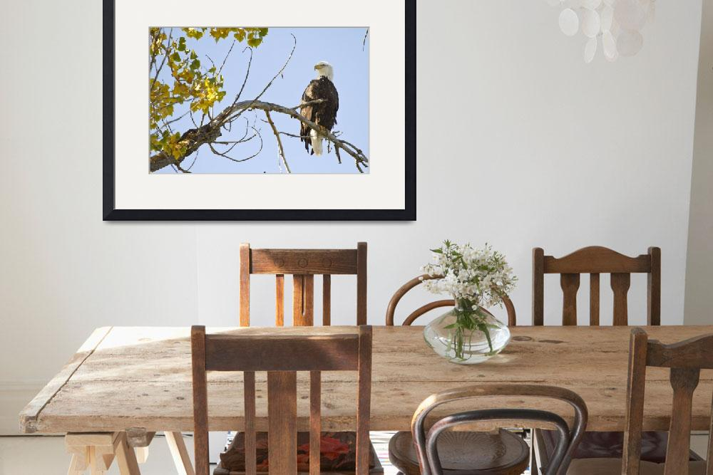 """""""American Bald Eagle On The Perch&quot  (2014) by lightningman"""