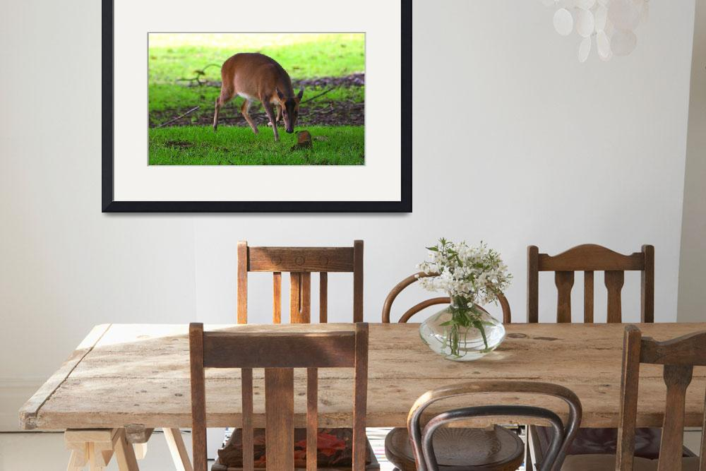 """""""Wild Muntjac""""  (2008) by jdmphotography1"""