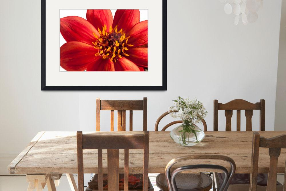 """""""Red dahlia_DSC1039&quot  (2014) by SusanJanePepper"""