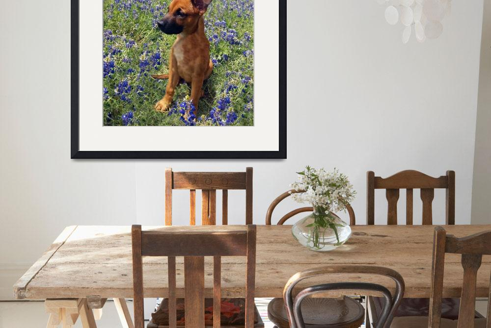 """Expressive Puppy and Bluebonnets Photo A19316&quot  (2016) by MasArtStudio"