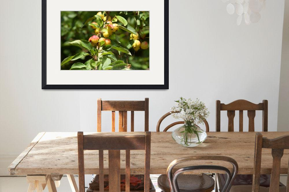 """Apple Tree&quot  by Alexphoto"