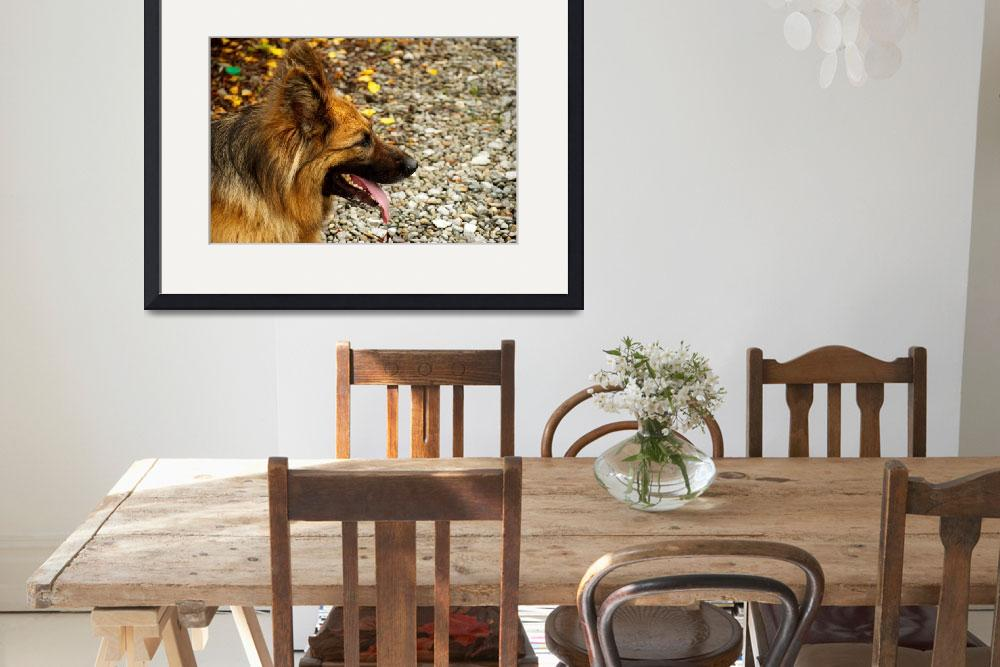"""""""Long-Haired German Shepherd&quot  by DamianSynnott"""