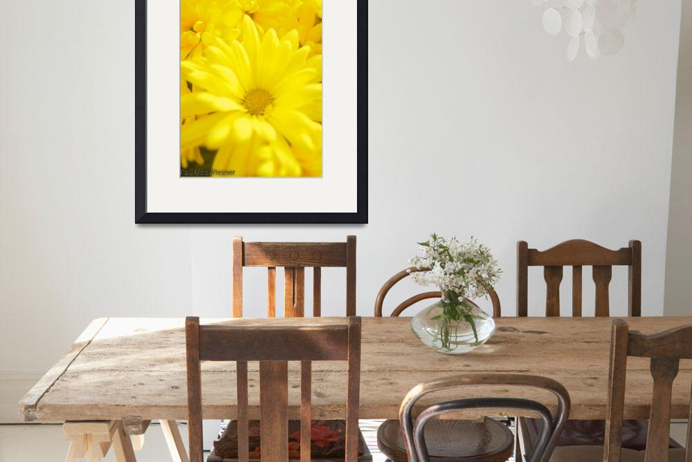"""all yellow flower (1 of 1)""  by pauludowiesner"