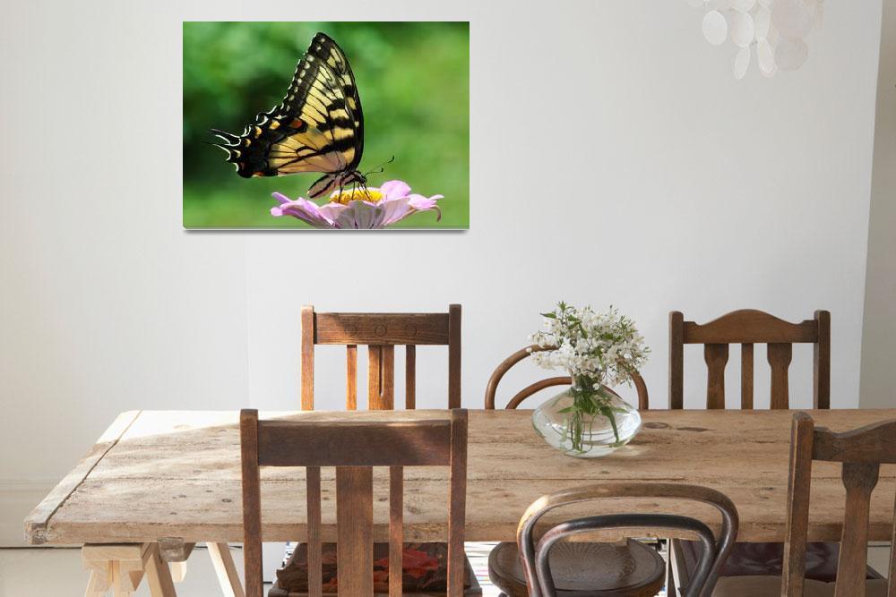 """Tiger Swallowtail Butterfly & Zinnia""  (2010) by evansonart"