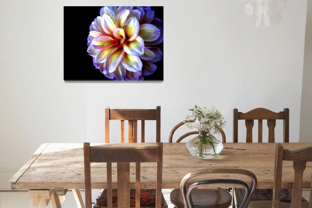 """""""Light In Darkness Dahlia Flower""""  (2007) by SoulfulPhotos"""
