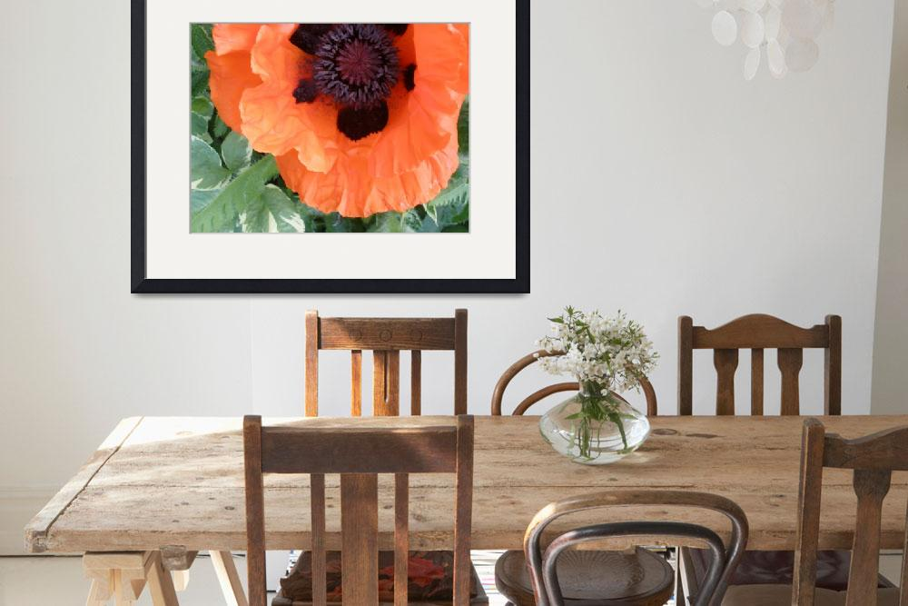 """""""Poppy in bloom&quot  (2009) by amburrito"""