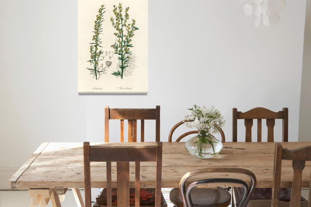 """Vintage Botanical Mugwort""  by FineArtClassics"