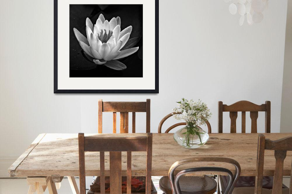 """""""Water Lily In Black And White ll&quot  (2010) by bavosiphotoart"""