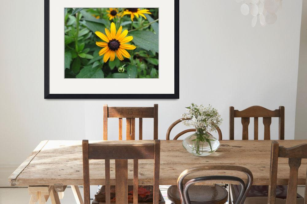 """""""Black-eyed Susan&quot  (2011) by Exedra"""