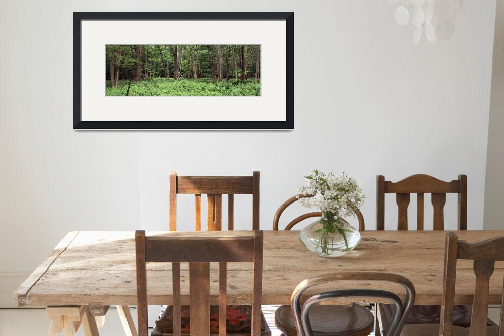 """Forest Adirondack Mountains Old Forge Herkimer Co&quot  by Panoramic_Images"