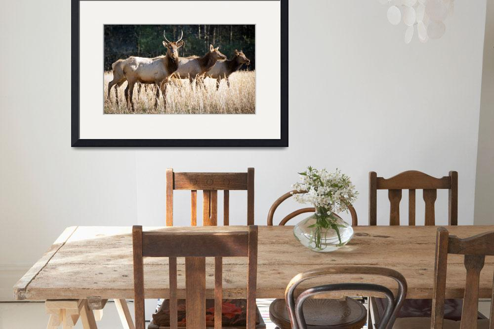"""""""Cataloochee Elk - Great Smoky Mountains Wildlife&quot  (2011) by DAPhoto"""