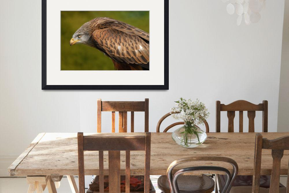 """""""Red Kite poised""""  by DougFR"""