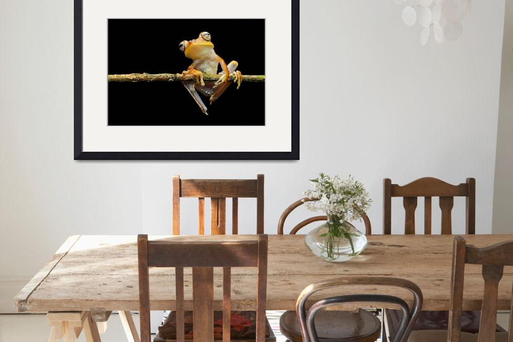 """""""Gunthers banded tree frog""""  (2015) by GFC_Collection"""