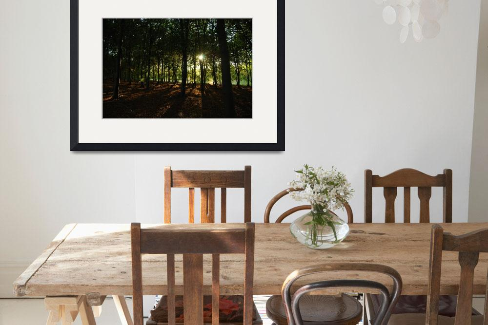 """""""Thetford Forest&quot  (2008) by ririphoto"""