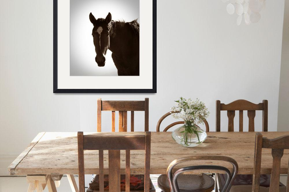 """""""Wild Horse of the Namib""""  (2010) by kimbsteinberg"""
