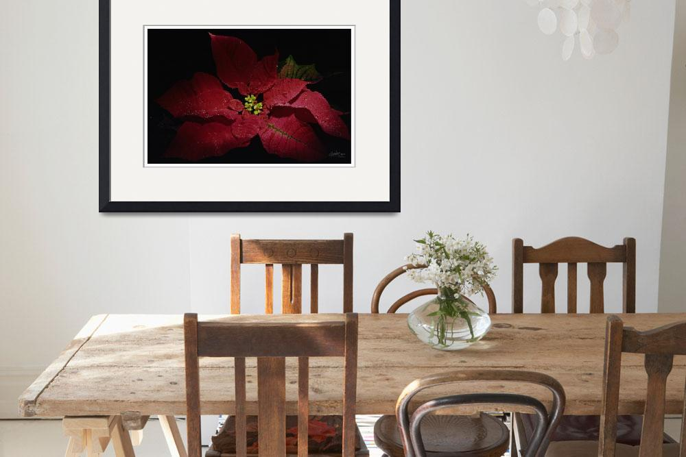 """Poinsettia by georgia brauer Holiday&quot  (2003) by artseeartgeorgiabrauer"