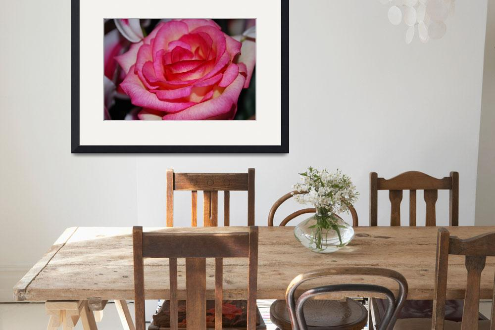 """Pink Rose 2""  by Rmbartstudio"