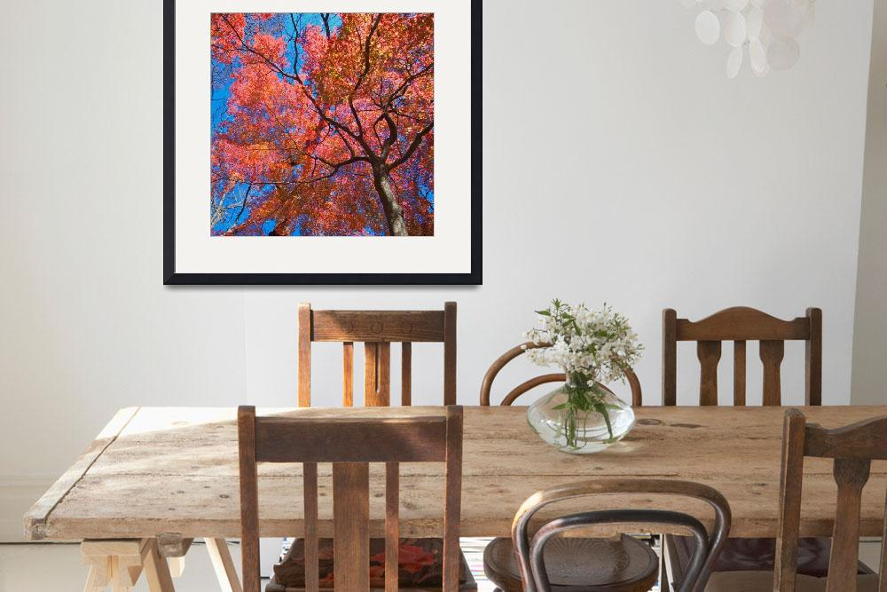 """Maple Tree&quot  (2008) by ImageArt-Photography"