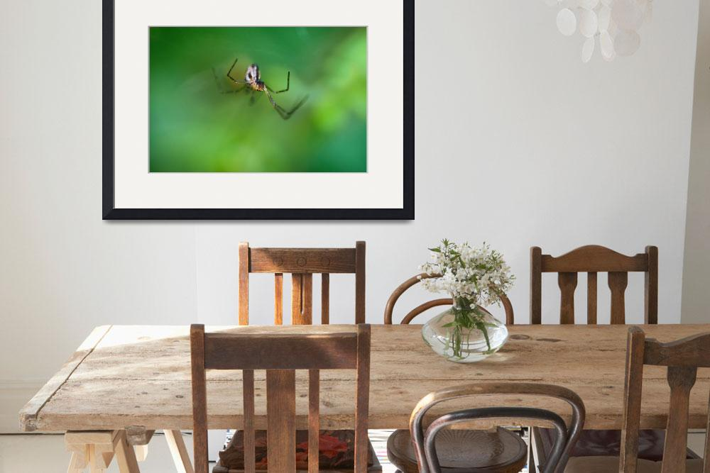 """""""Spider Hunting&quot  (2012) by DGuindon"""