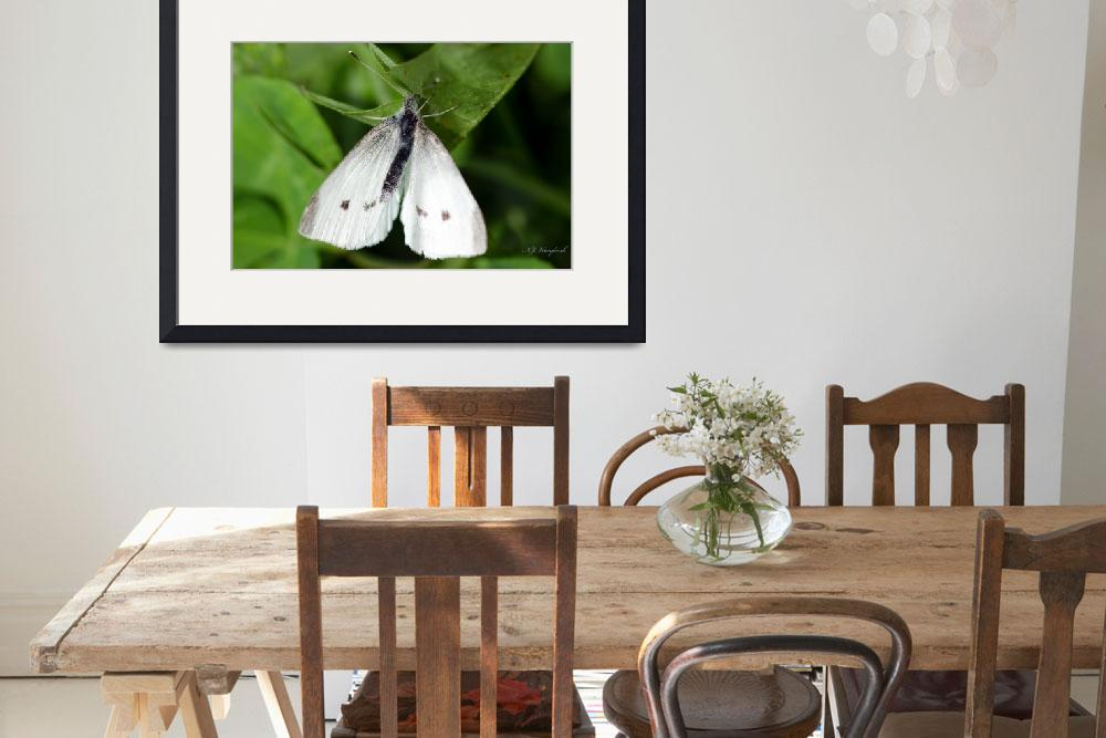 """""""Cabbage White Butterfly 064&quot  (2014) by Northernguy"""