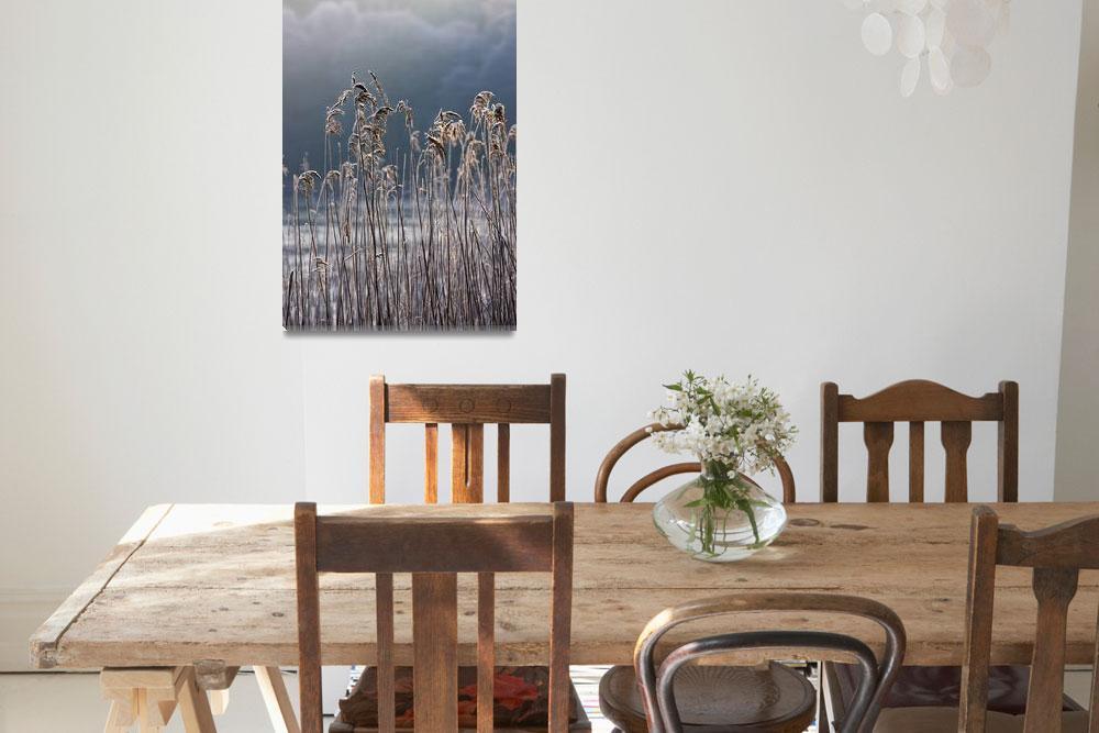 """Frozen Reeds At The Shore Of A Lake, Cumbria, Engl&quot  by DesignPics"