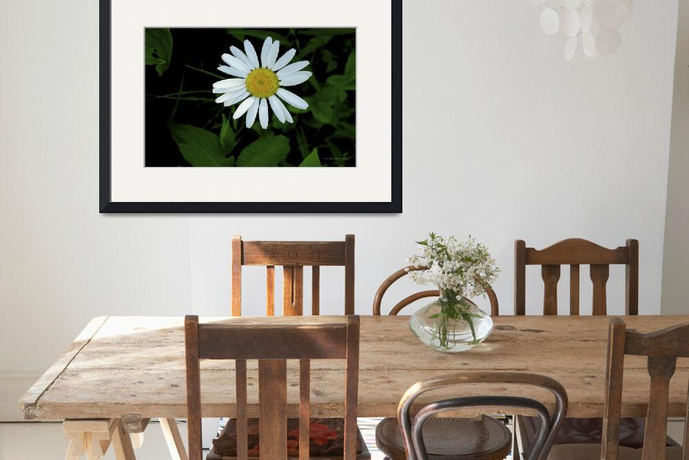 """""""Daisy&quot  by HodlinGallery"""
