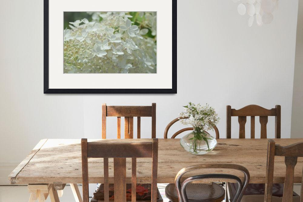 """""""White Hydrangea&quot  (2013) by jdlord"""