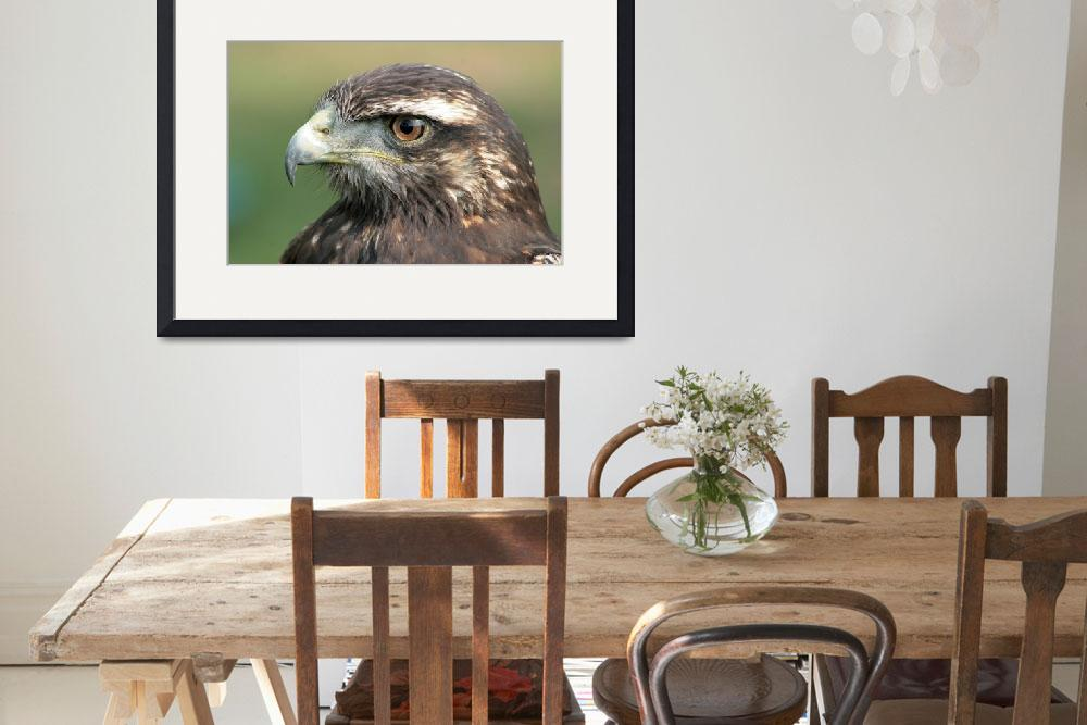 """Harris Hawk Watching&quot  (2014) by rhamm"