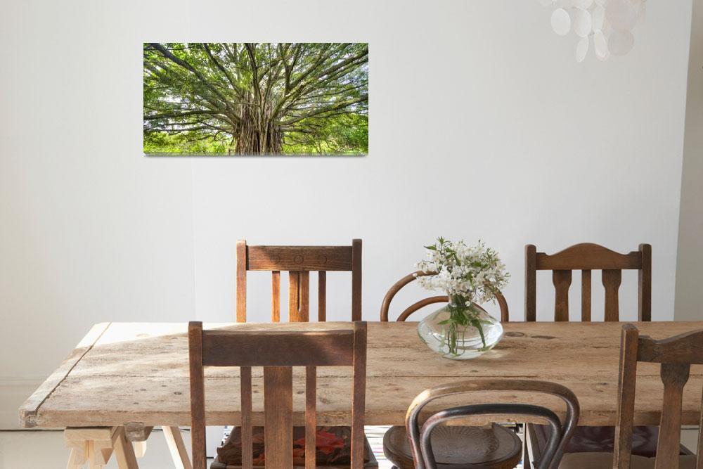 """Ancient Banyan Tree Maui Hana Hawaii&quot  (2011) by DustinKRyan"