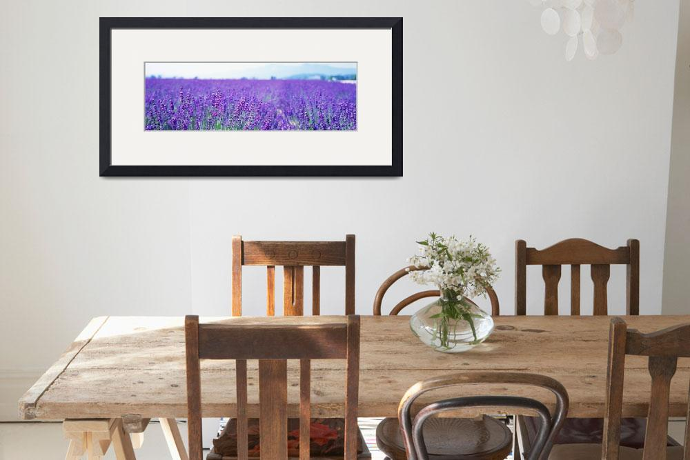 """Lavender Field Japan&quot  by Panoramic_Images"
