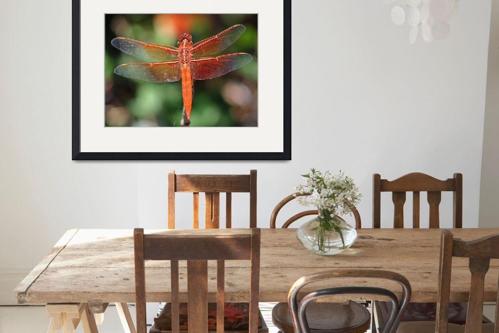 """""""Red Dragonfly&quot  by paulhood"""