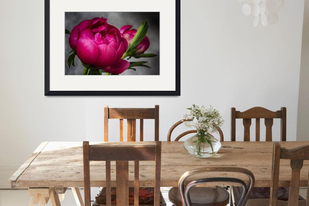 """Exquisite Peony&quot  (2013) by SoulfulPhotos"