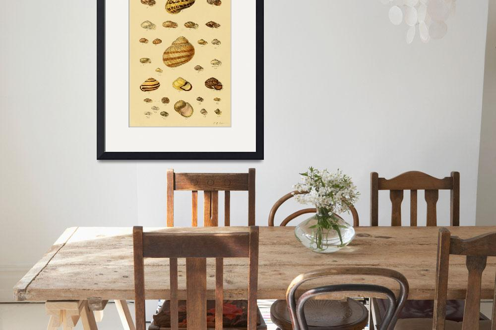 """""""Vintage Snail Shell Drawings&quot  by Alleycatshirts"""