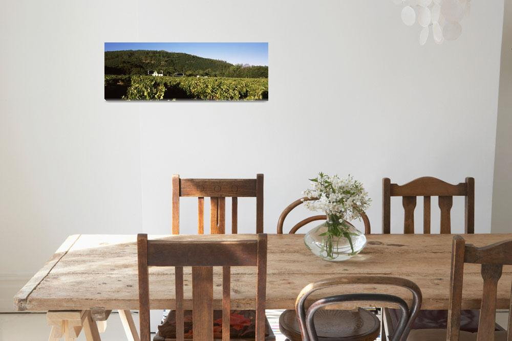 """""""Cape Dutch Style Farmhouse in a vineyard""""  by Panoramic_Images"""