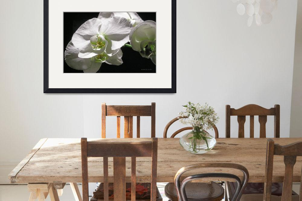 """""""Glass Flower&quot  by HodlinGallery"""