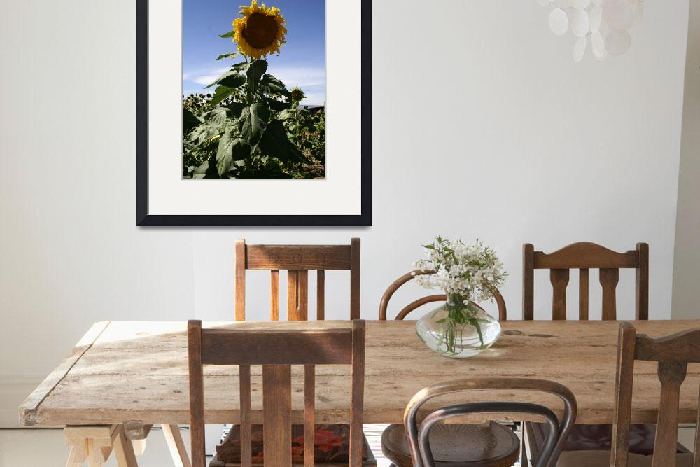 """""""Columbia Valley Sunflower&quot  (2007) by Photofish7"""