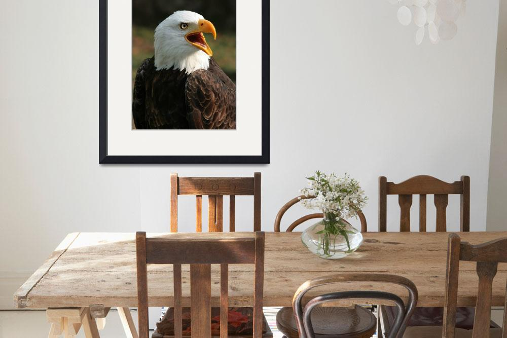 """""""Male Bald Eagle Chirping&quot  (2014) by rhamm"""