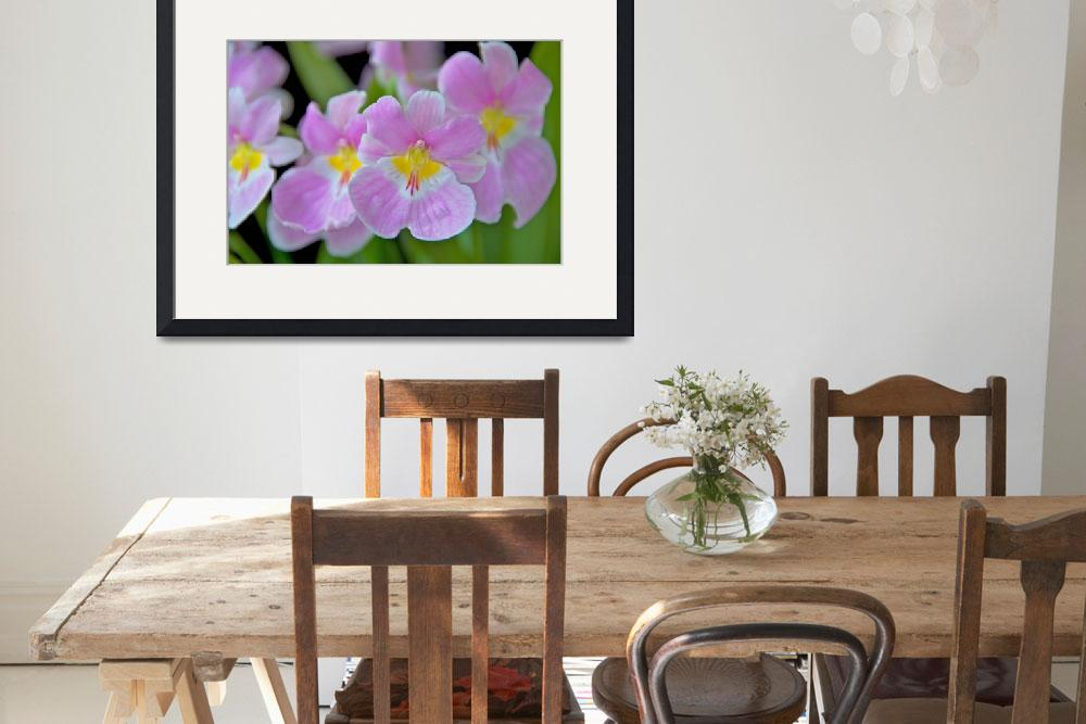 """""""Miltoniopsis Vexillaria&quot  (2009) by ImageArt-Photography"""