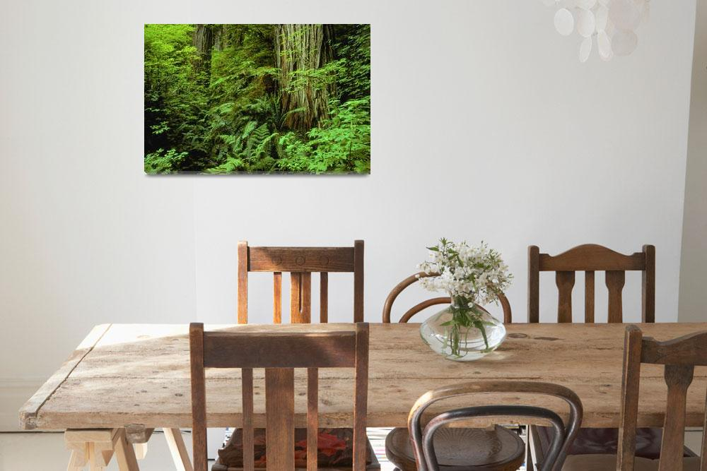 """""""Large Tree Trunks And Forest Floor, British Columb&quot  by DesignPics"""