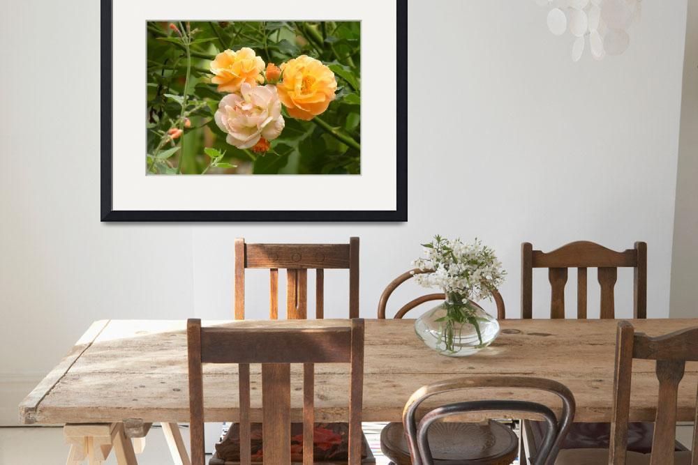 """Orange and Pink Roses in Garden&quot  (2012) by anniepics"