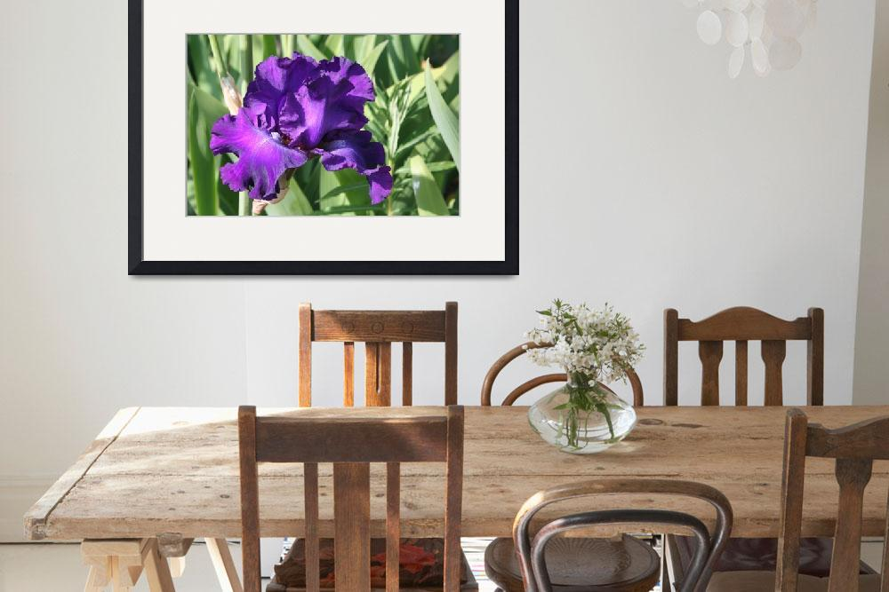"""""""Purple Iris FT3012""""  by marygaines"""