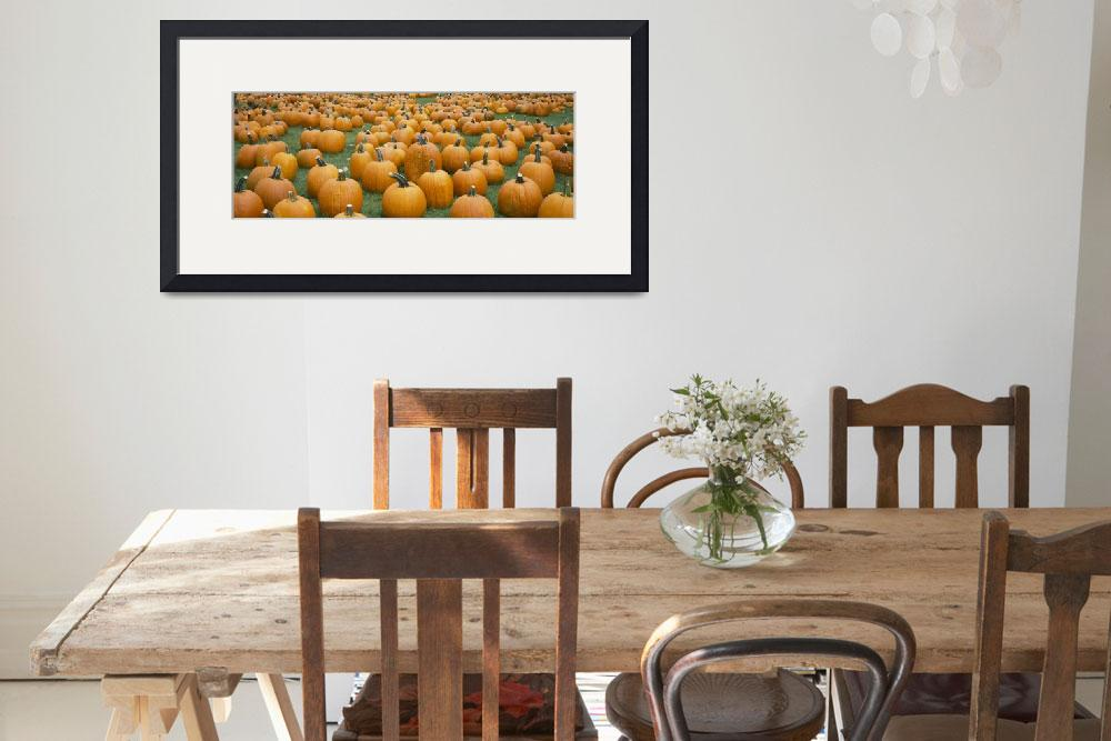 """""""Pumpkins in a field&quot  by Panoramic_Images"""