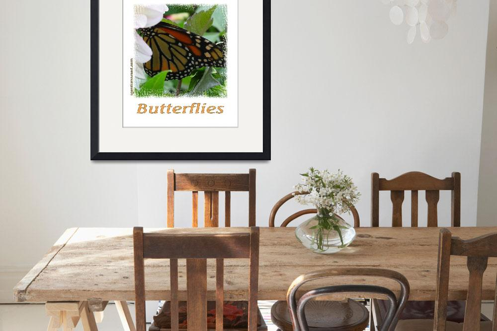 """Distracted by Monarch Butterflies 04171&quot  by quotes"