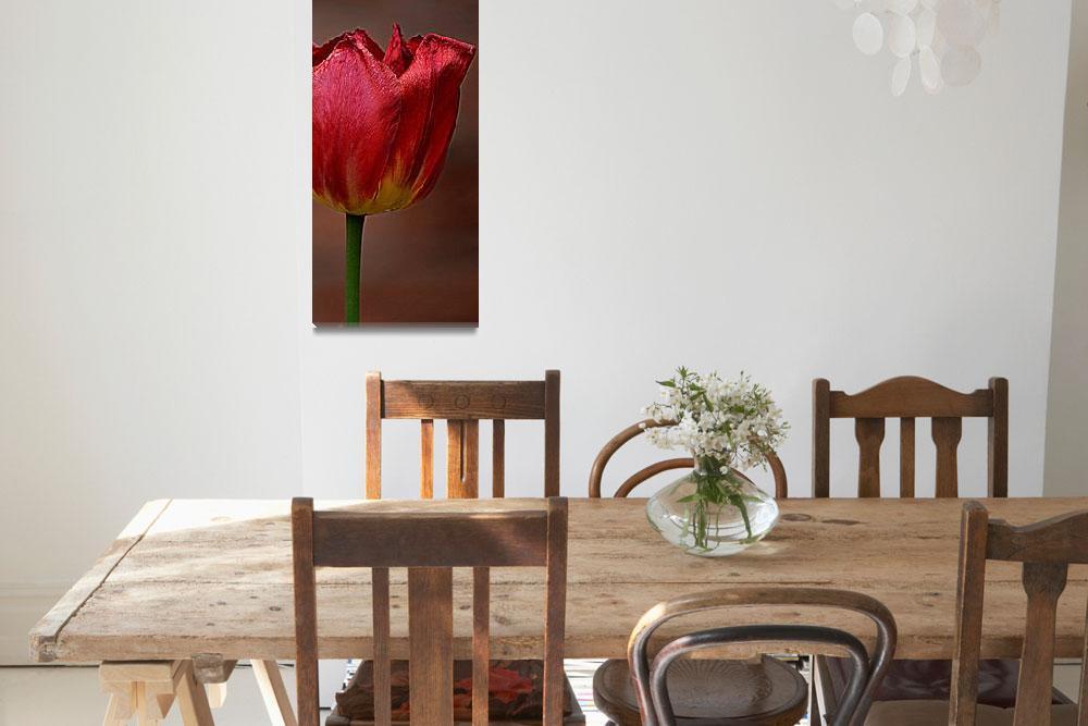 """Burgundy Tulip""  (2014) by joanhan"