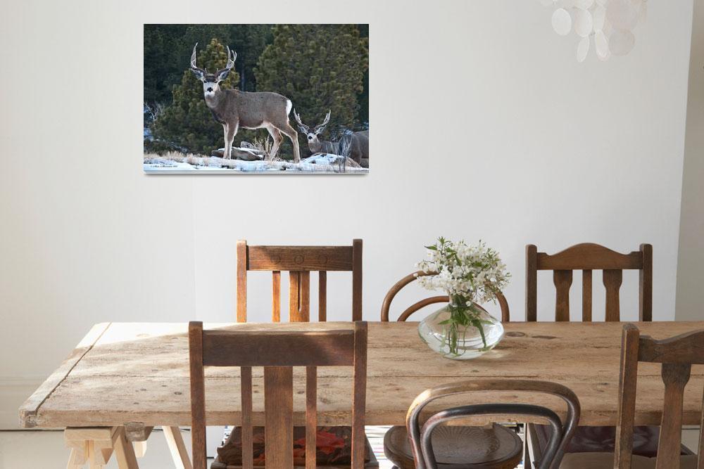 """""""Two Mule Deer Bucks&quot  (2011) by SamSherman"""